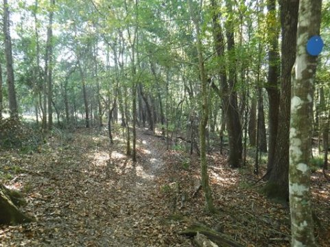 Payne's Prairie, eco-biking, lake pithlachocco trails